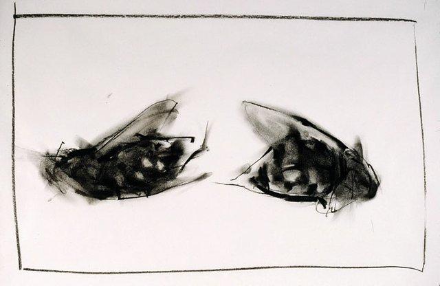 """Darcy Mann """"Flies"""" 2010"""