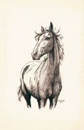 "Roland Gissing, ""Horse Study,"" nd"
