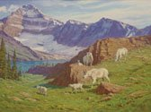 """Mountain Goats"""