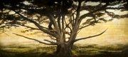 """Tree, (Messiaen #4)"""