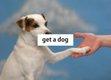 """Paul Butler, """"get a dog"""""""