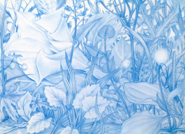 "Zachari Logan ""Garden 1, from Specimen Series (detail), 2013"""