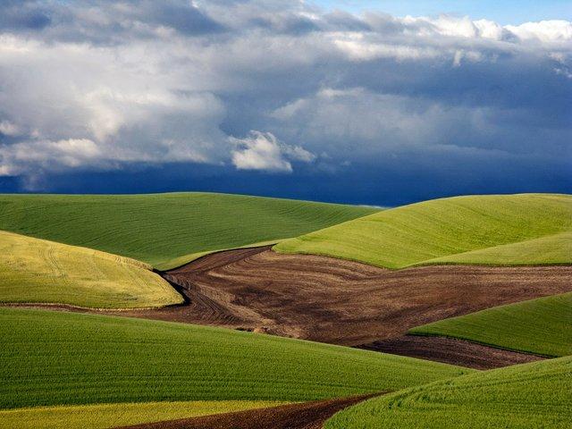 "Catharine Findlay ""Palouse Hills"""