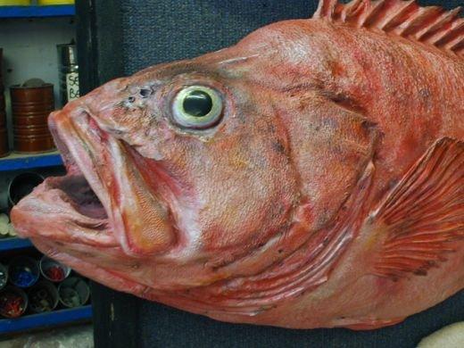 """Big Rockfish"""