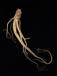 """Evan Lee """"Ginseng Root Studies"""" (series) 2005"""