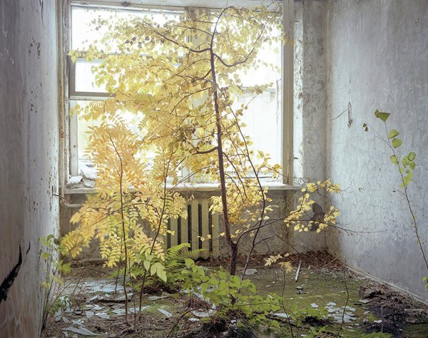 A tree growing in a crumbling hotel room.