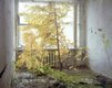 """Tree in Hotel Room, Pripyat"""