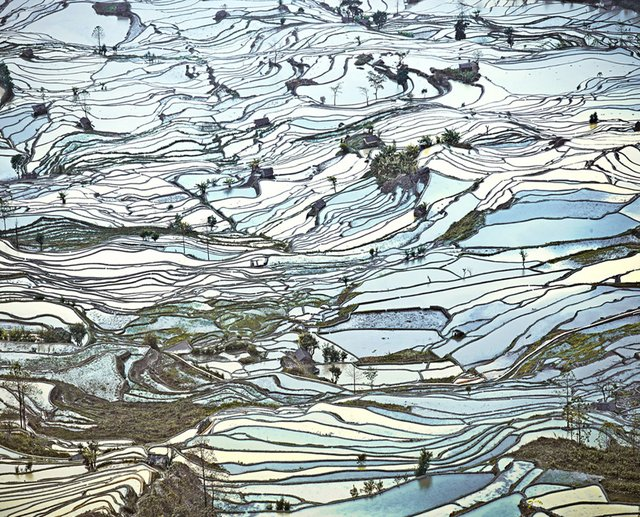 """Rice Terraces, (Laohuzui II), Yunnan, China"""