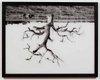 """Oak Tree Red Bluff (1-8)"""