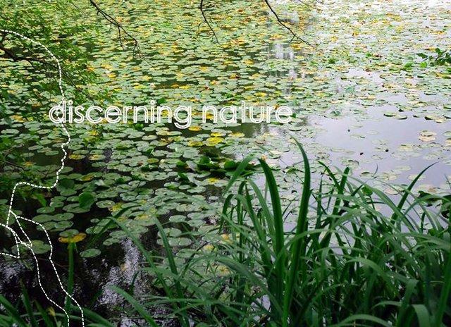 Discerning Nature