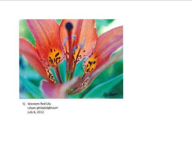 """Native Flowers of Nisku Prairie Reserve"""