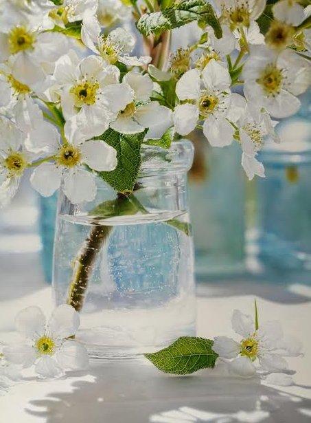 """""""Lovely Fruit Blossoms"""""""