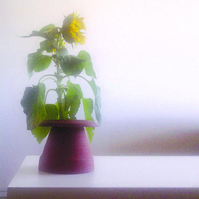 "Jeff Mair, ""Dystopian Vessel: Plant Pot (Helianthus),"" 2015"
