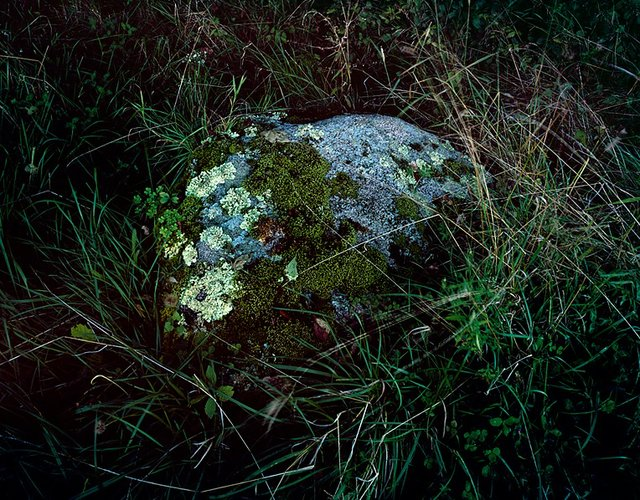 "Hua Jin, ""Moss,"" Ed. 1/5, Color Photograph, 30 x 40 in., 2015"