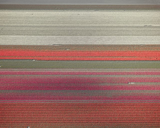 "David Burdeny, ""Veld 9, Noordoostpolder, Flevoland, the Netherlands,"" 2016"