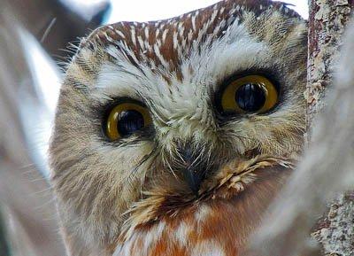 "Shawna Dycks, ""Owl,"" 2016"