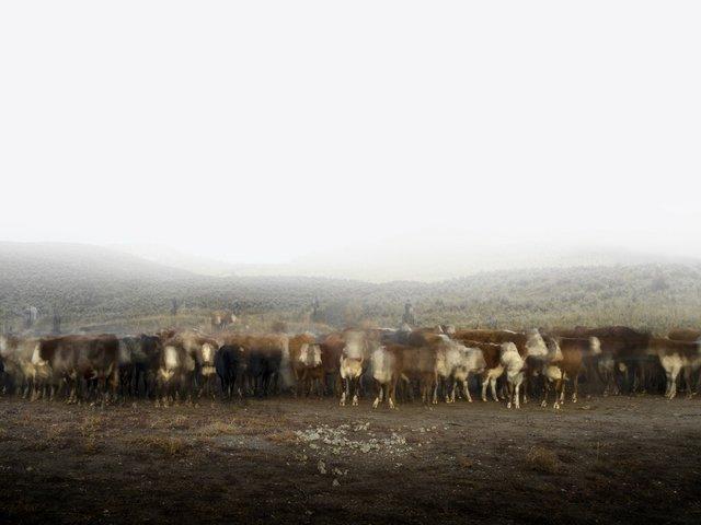 """Kevin Boyle, """"Cattle Call & Seven Cowboys,"""" 2015"""