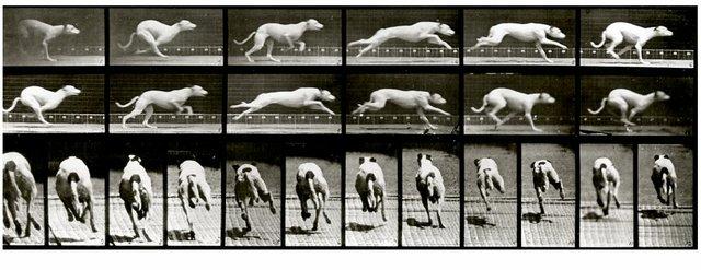 "Eadweard Muybridge, ""Plate #710 ""Maggie"" galloping,"" 1887"