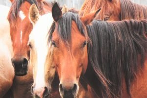 43 Horses, Enduring Spirits Exhibition