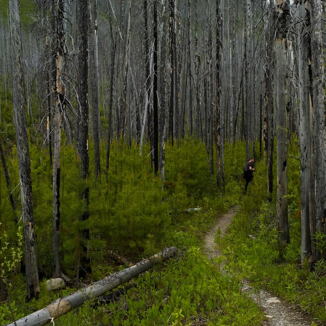 "Ellis Batkiewicz and Brad Hays, ""Walking In The Forest, "" nd"