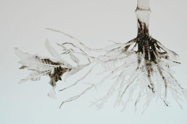 "Jennifer Wanner, ""Herbacentrice,"" 2010-2012, stop-motion animation (video still)"