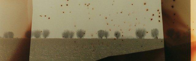 """Dianne Bos, """"Flanders Fields Stars (detail),"""" 2014"""