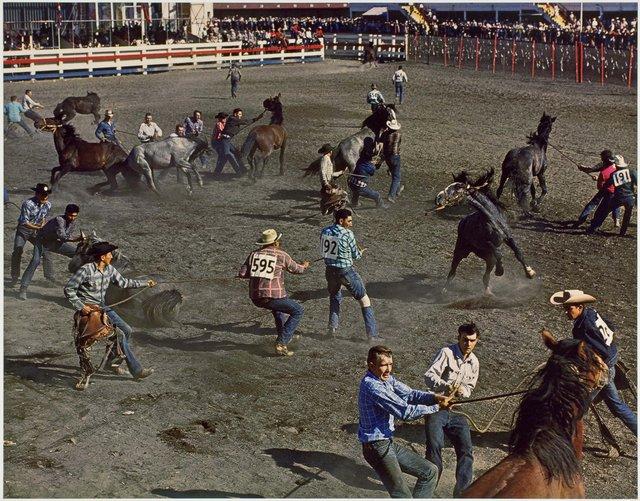"George Hunter, ""Wild Horse Race, Calgary Stampede,"" 1958"
