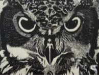 "Jamie Barnes, ""Owl,"" 2016/17"