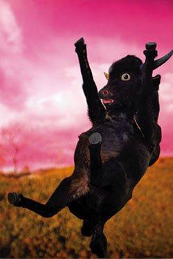 """Bull on Pink"""