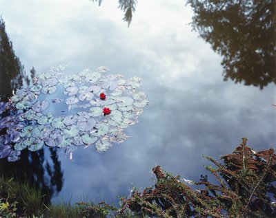 "Stephen Shore, ""Waterlilies,"" (from The Giverny Portfolio), 1977–83"