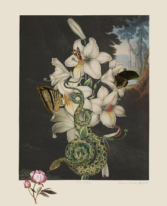 "Gloria Mok, ""The Rose"" (detail), n.d."